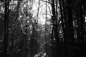 mysterious : schorfheide